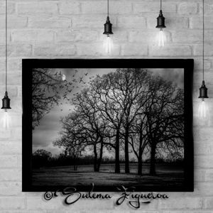 Wall Art  8 B&W series Originals by Sulema
